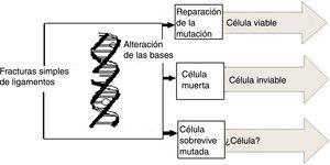 Consecuencia de los daños causados al ADN.