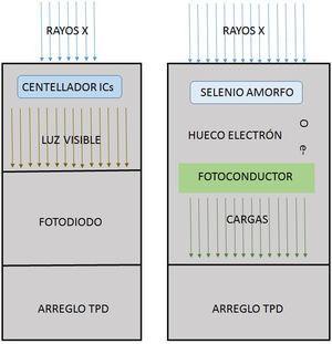 Los detectores digitales se basan en dos tipos de tecnología: la figura de la izquierda muestra el denominado detector digital indirecto en el cual los rayos X son convertidos en luz visible por medio de un material centellador, generalmente de yoduro de cesio, que es recogido por fotodiodos para conducirlos a los transistores de película delgada (TPD) que se disponen en un arreglo regular de millones de estos. A la derecha se muestra el esquema de trabajo de un detector digital directo; en este un semiconductor amorfo, silicio o selenio, produce un par hueco/electrón cuando sobre él inciden los rayos X; los electrones son recogidos por los colectores de los TPD del arreglo.