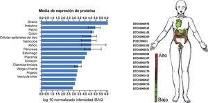 Nivel de expresión de ECA2 en tejidos y líneas celulares. Estudios de proteómica integrada (ProteomicDB)30 reportan un nivel de expresión tisular de ECA2 (Q9BYF1) predominante en ovario, intestino, testículo, riñón, páncreas, estómago, placenta, corazón, glándula tiroides, vejiga urinaria, hígado y vesícula biliar.