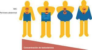 Correlación entre concentración de testosterona, índice de masa corporal (IMC) y perímetro abdominal.