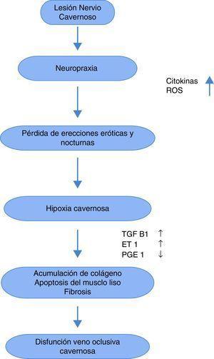 Círculo vicioso de la disfunción eréctil posprostatectomía radical. Adaptado de European Urology, 55:2009;334-347.