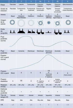 Las seis etapas del proceso de erección normal y los parámetros hemodinámicos de cada una.