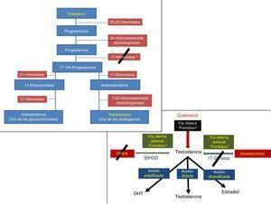Acción de la abiraterona en las vías «frontdoor» de la síntesis de testosterona.