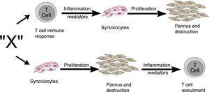 Vías alternativas por las que el factor desconocido «X» en AR podría inducir la formación del pannus. Puede iniciar por la vía dependiente de las células T o por la vía de los sinoviocitos25.
