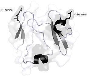 Representación 3D de la estructura de la proteína DKK-1. Las hélices a se observan en color negro y las hojas plegadas b se observan de color gris oscuro. Imagen realizada y modificada por Paymol DLP 3D, Cod. RSCB 3S8V chain X. Secuencia disponible en UniProtKB: O94907. Editado por Chila-M. L. 2018.