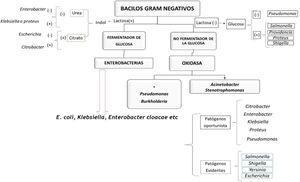 Enfoque práctico de gramnegativas de acuerdo a las infecciones más comunes. Fuente: autores.