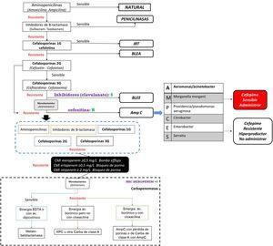 Algoritmo para identificación de resistencia a gramnegativos. Fuente: autores.