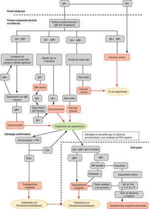 Flujograma de atención para el diagnóstico y tratamiento de la toxoplasmosis durante el embarazo.