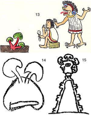 13: Parte del Códice Magliabecchiano (Wasson y Wasson, 1957). 14: Glifo del Códice 27 (del Caso, 1963). 15: Glifo del Códice de Zacatepec (de Wasson, 1980).