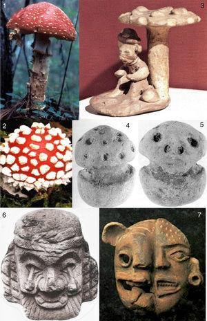 Amanita muscaria. 1-2: Estado silvestre, adulto y botón, respectivamente (de E. Fanti). 3: Museo Regional de Guadalajara, representación de A. muscaria con un personaje debajo (de E. Fanti). 4-5: Pieza purépecha (frente y reverso), 4 el botón (compárese con la fig. 2) y 5 una calavera representando la acción del hongo en la cabeza (4-5 de Guzmán). 6: Cultura náhualt, con A. muscaria en vez de ojos. 7: Cultura maya con A. muscaria arriba a la derecha y deformaciones en la cara (6-7 del archivo de C. de Borhegyi).