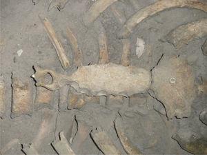 Detalle del esternón con perforación del apéndice xifoides (foto P. Hernández).
