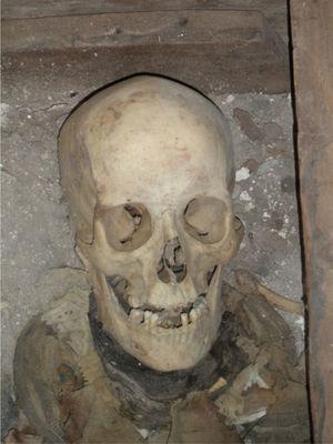 Cráneo atribuido a Juan Bautista de Anza (foto P. Hernández).