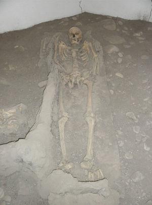 Esqueleto atribuido a Eusebio Francisco Kino, tal y como se exhibe actualmente en la cripta de Magdalena de Kino, Sonora (foto P. Hernández).