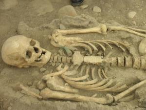 Detalle del esqueleto atribuido a Eusebio Francisco Kino, tal y como se exhibe en la actualidad. Nótese la clavícula izquierda pigmentada por la cruz de hierro que se encontró asociada a este esqueleto (foto P. Hernández).