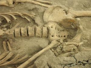Detalle de la región inferior del esqueleto atribuido a Eusebio Francisco Kino (foto P. Hernández).
