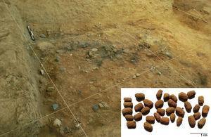 Área de acumulación de basura denominado como depósito 1A en la unidad–III XX, Huaca Ventarrón (Alva, 2013, p. 145) y los coprolitos de roedores analizados.