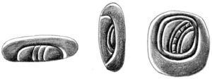 Mirror hieroglyphs (from left to right) T24, T121, and T617. Drawn after Moisés Aguirre based on the Macri and Looper's drawing (2003: 274-275).