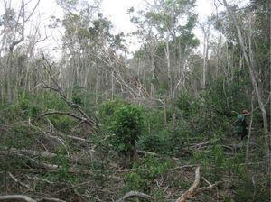 Milpa comedero-trampa (tamaño: 3 mecates [1 200m2]), propiedad de don Facundo Puc, de 55 años, comunidad de Uh May, Quintana Roo. Fuente: fotografía realizada por Dídac Santos-Fita (2011).