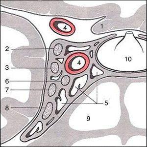 1. Nervio óptico; 2. Tercer nervio craneal; 3. Cuarto nervio craneal; 4. A. carótida interna; 5. Seno cavernoso; 6. Sexto nervio craneal; 7. Rama V1 del trigémino; 8. Rama V2 del trigémino; 9. Seno esfenoides; 10. Glándula hipófisis.