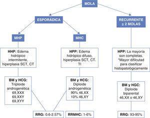 Clasificación de la mola hidatidiforme. MHP: mola hidatidiforme parcial; MHC: mola hidatidiforme completa; HHP: hallazgos histopatológicos; BM: bases moleculares; SCT: sinciciotrofoblasto; CT: citotrofoblasto; TI: trofoblasto intermedio; HCG: hallazgos citogenéticos; RRG: riesgo de recurrencia general; RRMHC: riesgo de recurrencia mola hidatidiforme completa.