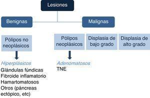 Tipo de lesiones polipoideas y potencial neoplásico de acuerdo a histopatología. Los pólipos hiperplásicos y de glándula fúndica, y los adenomatosos, son los pólipos benignos y malignos más frecuentes, respectivamente. TNE, tumor neuroendocrino.