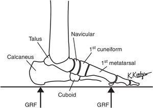 The osseous compression load-bearing elements serve to provide the structural framework of the longitudinal arch. The talus and calcaneus form the rearfoot and the navicular, cuboid, cuneiform and metatarsals form the forefoot. Longitudinal arch flattening, involving the motions of rearfoot plantarflexion and forefoot dorsiflexion, occurs when ground reaction force (GRF) acts on the plantar rearfoot and forefoot. Longitudinal arch elevation, involving rearfoot dorsiflexion and the forefoot plantarflexion, occurs when GRF is reduced on the plantar foot.