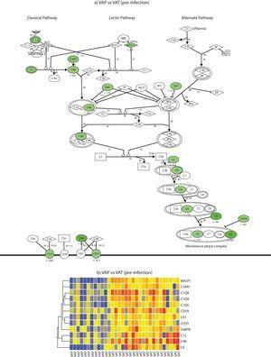 Complement system gene expression analysis. (a) IPA canonical pathway modelling of the complement system pathway in the pre-infection phase. Those genes with relative lower expression in VAP vs VAT are depicted in green. (b) One-way hierarchical clustering of those genes selected by IPA (red, upregulated; blue, downregulated) in the pre-infection and infection phases in VAP and VAT.