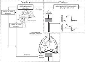 Bases de la interacción paciente ventilador. La ventilación asistida tiene la difícil tarea de coordinar 2 sistemas: el paciente y el ventilador, cada uno con su propio controlador que a su vez regula su propia bomba. El sistema de control respiratorio es complejo, con un sistema automático y un sistema voluntario. Las aferencias llevan al sistema de control los estímulos procedentes de los sensores (quimiorreceptores centrales y periféricos, receptores de estiramiento y receptores musculares) que regulan el impulso respiratorio neural. Del sistema de control automático salen las eferencias (motoneuronas) que activan y regulan la bomba muscular. El sistema voluntario a su vez puede modular la actividad del sistema automático o activar directamente la bomba muscular.