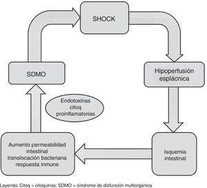 Esquema de la relación entre shock e hipoperfusión esplácnica. citoq: citocinas; SDMO: síndrome de disfunción multiorgánica.