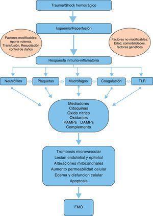 Resumen de la fisiopatología del fallo multiorgánico tras un traumatismo grave.