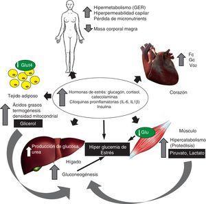 Alteraciones fisiopatológicas y metabólicas en el paciente quemado grave.