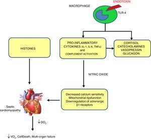 Mechanisms of sepsis-induced cardiomyopathy. Endotoxins cause depressed cardiac contractility, which is mediated by enhanced nitric oxide (NO) production. Tumor necrosis factor and interleukin-1β also contribute to NO overproduction. NO is believed to act in the heart by decreasing myofibril response to calcium, inducing mitochondrial dysfunction, and downregulating β-adrenergic receptors. These reactions lead to sepsis-induced cardiomyopathy. Histones occur inside the nucleus and can be released into circulation because of extensive inflammation and cellular death during sepsis and are also implicated in the pathophysiology of sepsis-induced cardiomyopathy.