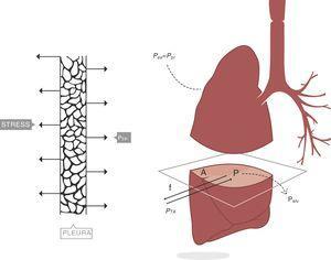 Presión transpulmonar (PTP)=presión de retracción. A: superficie A; f: fuerza; P: punto P; Palv: presión alveolar; Pes: presión esofágica; Ppl: presión pleural. Fuente: reproducida con permiso de Modesto-Alapont V et al.26
