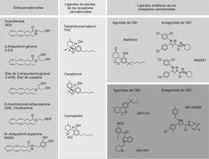 Estructura química de los endocannabinoides o cannabinoides (CB) endógenos, de los ligandos de plantas de los receptores de CB y de los ligandos sintéticos de los receptores de CB. Estructura química de los endocannabinoides identificados hasta la fecha (columna de la izquierda). Estructura química de los 3 CB de plantas más abundantes (columna central): el psicotrópico delta9- tetrahidrocannabinol, y los no psicoactivos cannabidiol y cannabinol. Estructura química de algunos ligandos sintéticos de los receptores de CB (columna de la derecha): en el panel superior se muestra un agonista del receptor de CB1 nabilone y 2 antagonistas, el rimonabant y el AM251; en el panel inferior se muestran los agonistas del receptor de CB2, el JWH-133 y el AM1241, y el antagonista SR144528.
