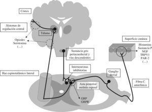 Vías de transmisión y regulación de la sensibilidad pruritoceptiva. NGF: neural growth factor; TRPV1: transient receptor potential vanilloid-1 'receptor vaniloide de tipo 1'; PAR-2: proteinase-activated receptor-2; GRP: gastrin releasing peptide; GRPR: gastrin releasing peptide receptor.
