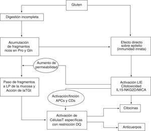 Representación esquemática de los principales procesos implicados en la patogenia de la enfermedad celíaca.