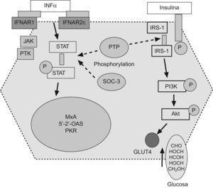 Las sustancias supresoras de citoquinas y las proteínas tirosin-fosfatasas podrían interferir tanto la señalización intracelular de la insulina como del interferón. IFNa: interferón α, IFNAR1: receptor-1 del interferón, JAK: janus kinasa, PTK: proteina tirosina kinasa, PKR: proteína kinasa R, IRS-1: receptor soluble-1 de la insulina, PI3K: fosfatidil-inositol-3-kinasa.