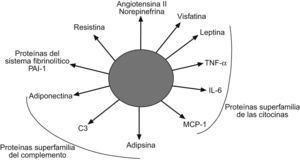 Clasificación de las adipoquinas mejor caracterizadas.