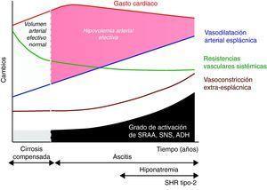 Teoría de la vasodilatación arterial periférica como causa de disfunción renal en la cirrosis. El mecanismo principal es una reducción progresiva de la resistencias vasculares esplácnicas debido a la vasodilatación arterial. Inicialmente es compensada por un aumento del gasto cardiaco. Sin embargo, de manera progresiva se produce un deterioro de la función cardiaca que disminuye el gasto cardiaco y contribuye finalmente a la reducción del volumen arterial efectivo. ADH: hormona antidiurética; SNS: sistema nervioso simpático; SRAA: sistema renina-angiotensina-aldosterona.