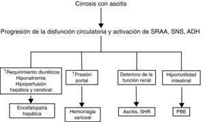 Papel patogénico de la disfunción circulatoria sistémica en las diferentes complicaciones de la cirrosis. ADH: hormona antidiurética; PBE: peritonitis bacteriana espontánea; SHR: síndrome hepatorrenal; SNS: sistema nervioso simpático; SRAA: sistema renina-angiotensina-aldosterona.