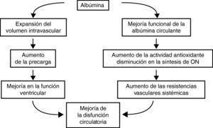 Efectos de la administración intravenosa de albúmina sobre la hemodinámica sistémica en pacientes cirróticos. ON: óxido nítrico.
