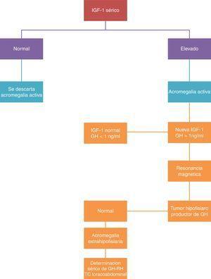 Algortimo diagnóstico en la acromegalia. Tomada y modificada de Melmed S. Medial progress: acromegaly. N Engl J Med 2006; 355: 2558-2573.