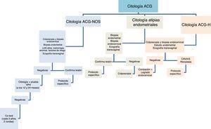 Algoritmo diagnóstico ante un resultado citológico de atipia de células glandulares. ACG: atipia de células glandulares; ACG-H: atipia celular glandular de alto grado; ACG-NOS: atipia celular glandular no especificada; AIS: adenocarcinoma in situ; CIN: neoplasia intraepitelial cervical; VPH: virus del papiloma humano.