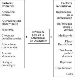 Factores implicados en la pérdida de peso en la enfermedad de Alzheimer avanzada.