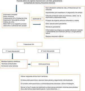 Algoritmo diagnóstico y terapéutico de la vejiga hiperactiva en el paciente mayor. Paciente afecto de urgencia miccional (con o sin IUU), generalmente acompañado de nicturia y frecuencia miccional.