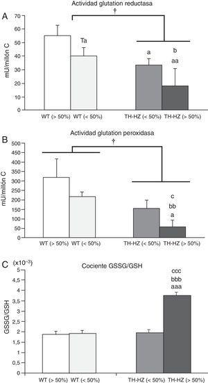 Parámetros de estrés oxidativo de los leucocitos peritoneales de ratones control (WT) y con una haploinsuficiencia para la enzima tirosina hidroxilasa (TH-HZ), clasificados según la proporción de animales en la jaula: WT>50% (la proporción de controles fue superior al 50%), WT<50% (la proporción de WT fue menor al 50% respecto a los TH-HZ), TH-HZ<50% (la proporción de TH-HZ fue menor al 50% respecto a los WT) y TH-HZ>50% (la proporción de TH-HZ fue mayor al 50%). Cada columna representa la media±desviación estándar de 5 valores correspondientes a ese mismo número de animales. A) Actividad glutatión reductasa representada en miliunidades/millón de células leucocitarias (mU/millón C). B) Actividad glutatión peroxidasa representada en miliunidades/millón de células leucocitarias (mU/millón C). C) Cociente glutatión oxidado (GSSG)/glutatión reducido (GSH). † p<0,05 con respecto a los animales WT; a p<0,05, aa p<0,05, aaa p<0,001, con respecto a los animales WT>50%; b p<0,05, bb p<0,01, bbb p<0,001, con respecto a los animales WT<50%; c p<0,05, ccc p<0,001, con respecto a los animales TH-HZ<50%. Ta p=0,055, con respecto a los animales WT>50%.