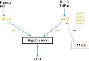 Mecanismo de acción de los inhibidores de GATA.