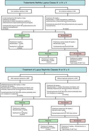 Algoritmo terapéutico de las nefritis lúpicas tipos III-V.