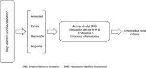 Mecanismos fisiopatológicos que relacionan el bajo estrato socioeconómico, factores psicosociales y el desarrollo de la ERC.