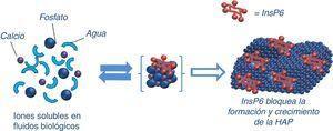 Mecanismo de inhibición de la formación y crecimiento de hidroxiapatita (HAP) por fitato (InsP6).
